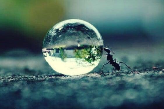 hormiga que simboliza la tenacidad